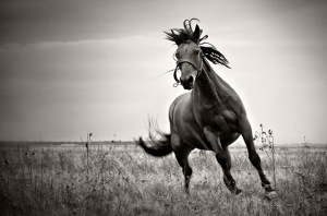 32-Beautiful-Horse-Photography-1