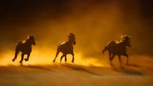 32-Beautiful-Horse-Photography-15