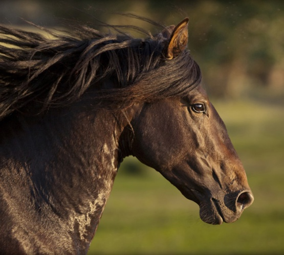 32-Beautiful-Horse-Photography