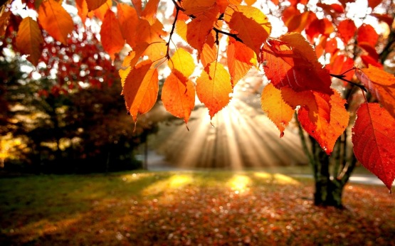 autumn-leaves-trees-the-rays-nature