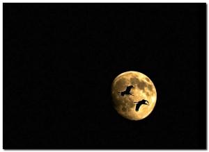 Night flite_