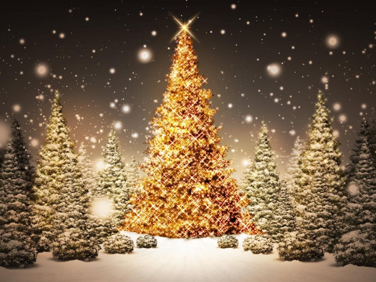 7 curiozități despre bradul de Crăciun