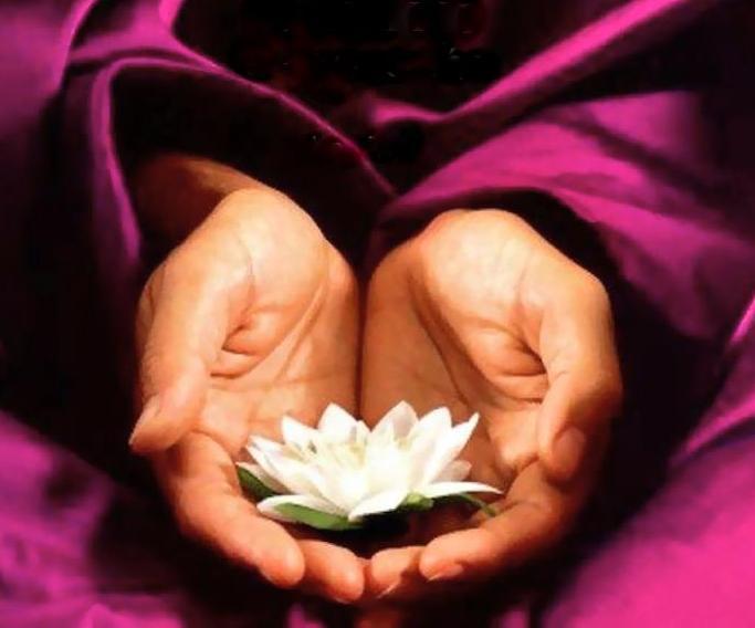 floarelotusmana