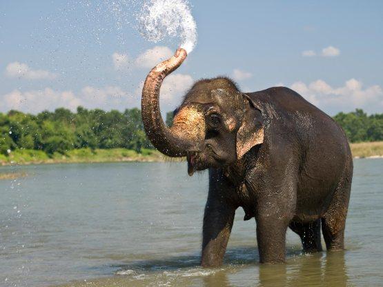 background-elephant4