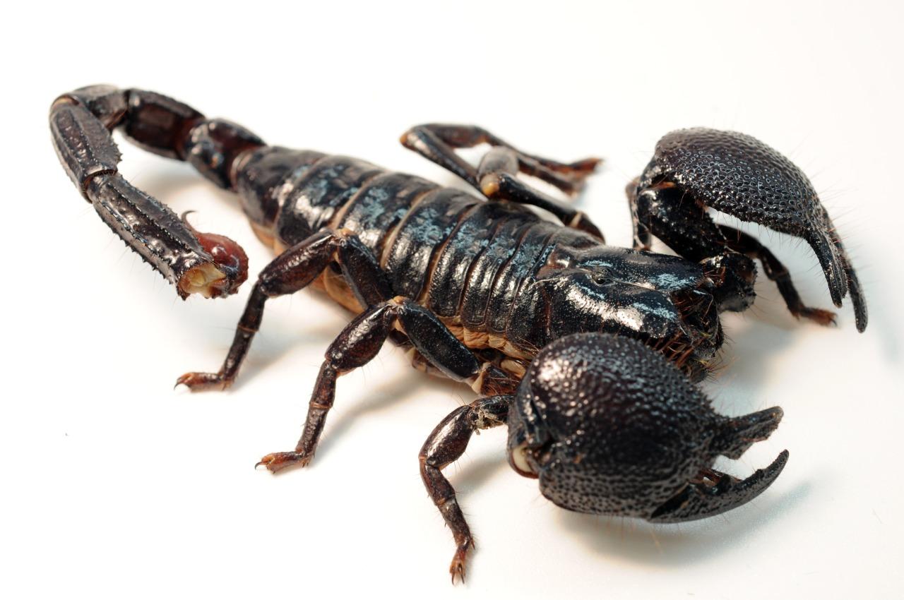 Pozitii sexuale pentru femeia scorpion