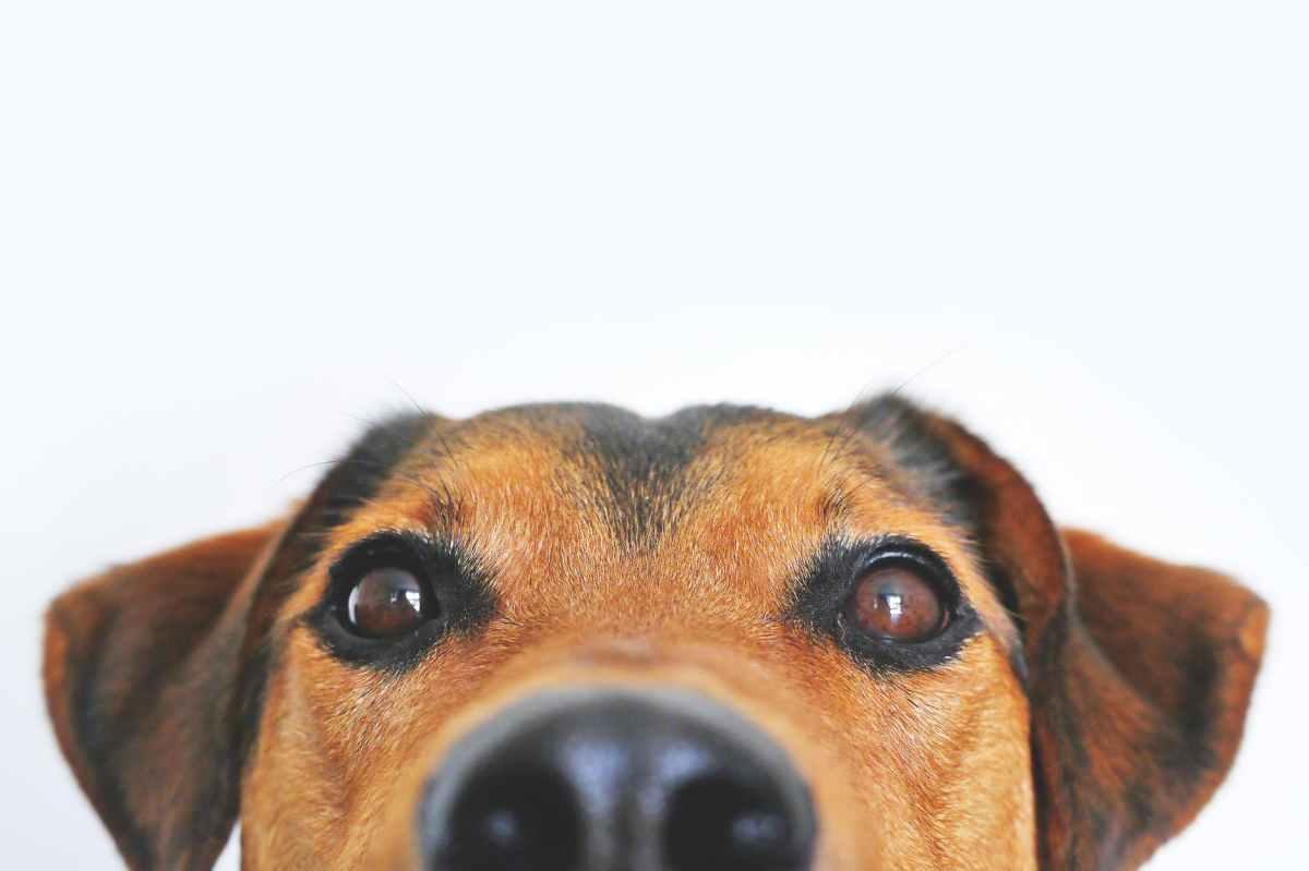 Horoscop chinezesc 2018 - Anul Câinelui de Pământ