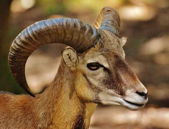 aries-wild-free-running-wildlife-park-158025.jpeg